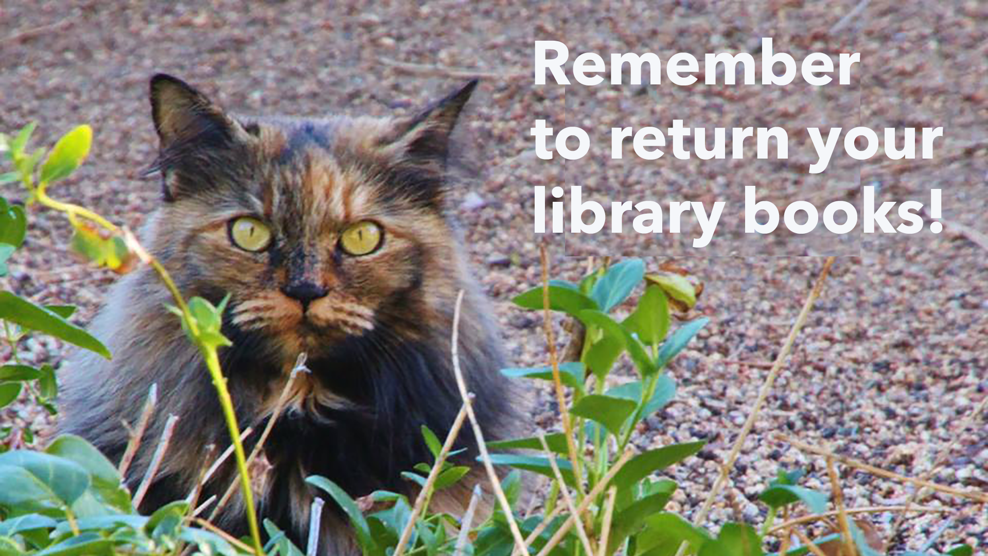 remember to return your library books