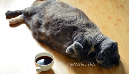 cat lying down next to coffee i wanted tea