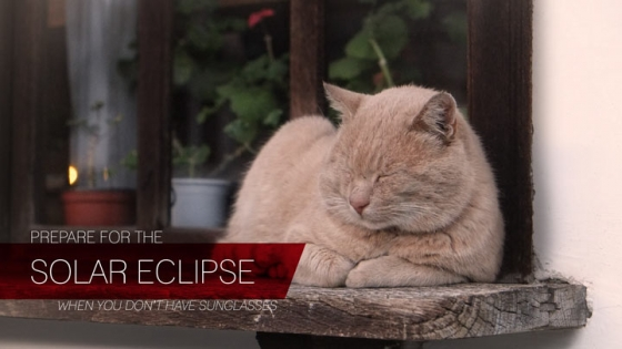 prepare for solar eclipse cat squinting by window